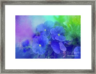 Blue Pansies Framed Print