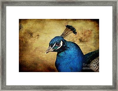 Blue Peacock Framed Print