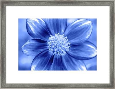 Blue Petal Face Framed Print by Sean Davey