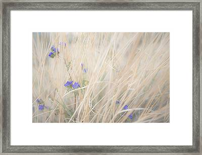 Blue Phacelia Framed Print