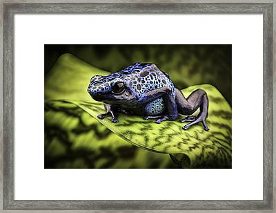 Blue Poison Dart Frog Amazon Rain Forest Framed Print by Dirk Ercken