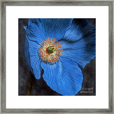 Blue Poppy Framed Print by Lawrence Supino