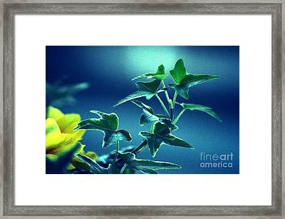 Blue Power  Framed Print by Susanne Van Hulst