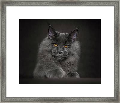 Framed Print featuring the photograph Blue Prince by Robert Sijka