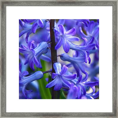 Framed Print featuring the photograph Blue Rhapsody by Byron Varvarigos