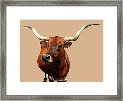 Blue Ribbon Pose Framed Print
