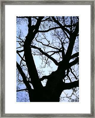 Blue Framed Print by Richard N Watkins