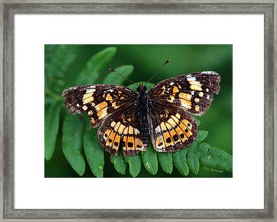 Blue Ridge Butterfly Framed Print
