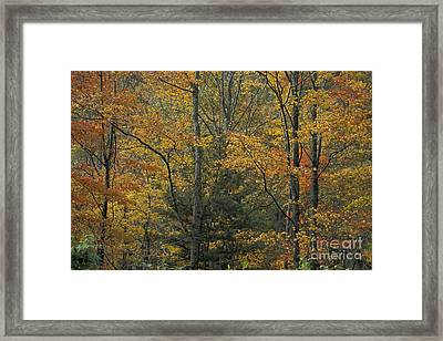 Blue Ridge Color Framed Print by Stan and Anne Foster