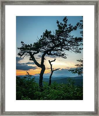 Blue Ridge Mountains Dr. Tree Framed Print