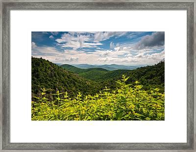 Blue Ridge Parkway Nc Summer Flowers Framed Print by Dave Allen