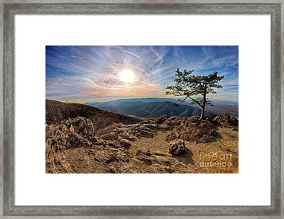 Blue Ridge Rocky Hilltop And Tree At Sunset Framed Print by Dan Carmichael