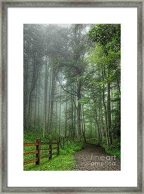 Blue Ridge - Trees In Fog Country Road I Framed Print by Dan Carmichael