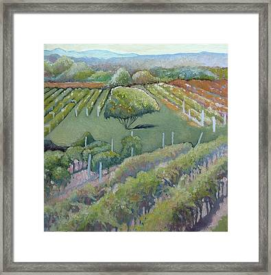 Blue Ridge Vineyards 4.0 Framed Print