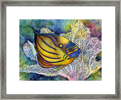 Blue Ring Angelfish Framed Print