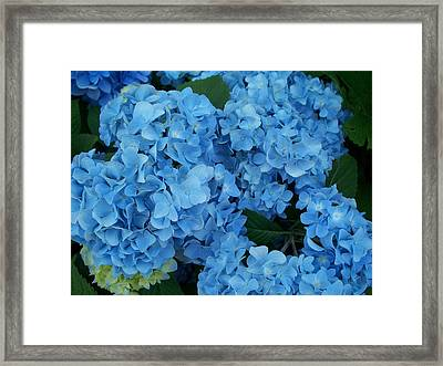 Blue Framed Print by Rosanne Bartlett