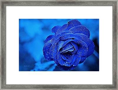 Blue Rose 2 Framed Print