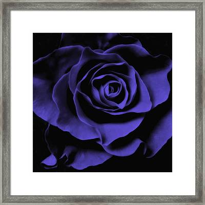 Blue Rose Abstract Art Flower Photograph  Framed Print by Artecco Fine Art Photography