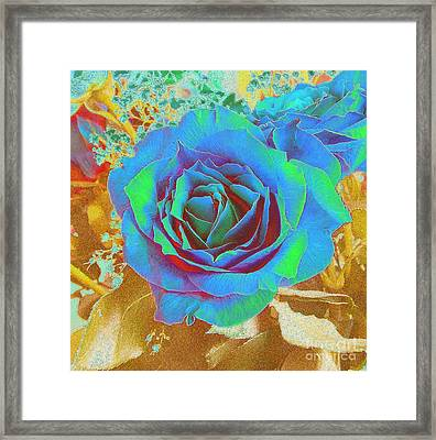 Blue Rose Framed Print by Addie Hocynec