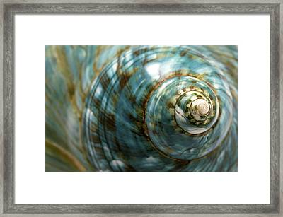 Blue Seashell Framed Print