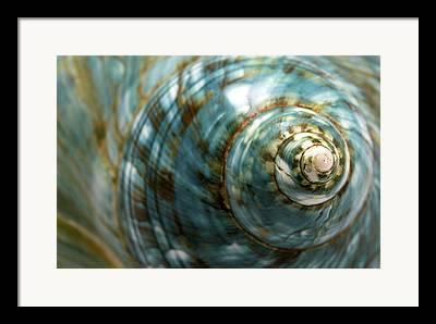 Mollusk Framed Prints