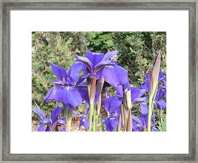 Blue Sentry  Framed Print