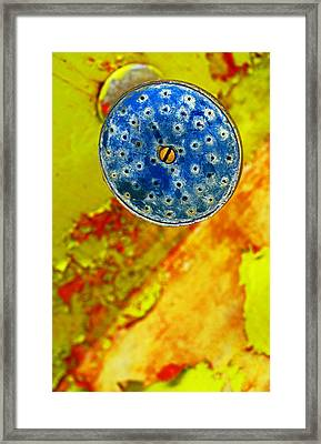 Blue Shower Head Framed Print by Skip Hunt
