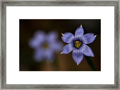 Blue Sixpetal Framed Print