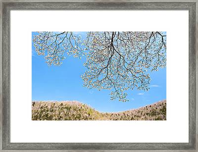Blue Skies And Dogwood Framed Print by Tamyra Ayles