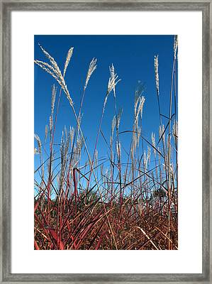 Blue Skies And Grasses Framed Print