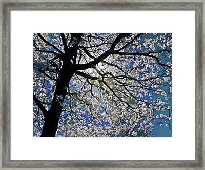 Framed Print featuring the photograph Blue Skies Smiling At Me by Linda Unger