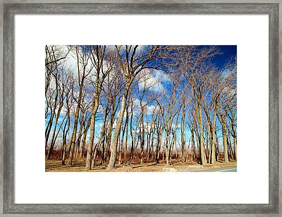 Framed Print featuring the photograph Blue Sky And Trees by Valentino Visentini