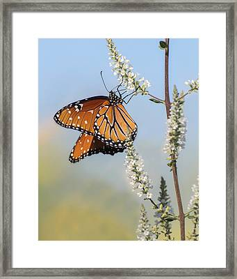 Framed Print featuring the photograph Blue Sky Dancer  by Julie Andel