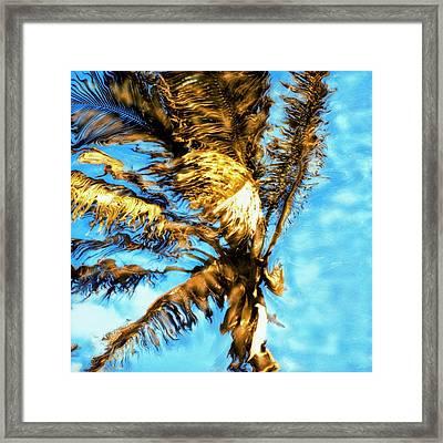 Blue Sky Palm Framed Print by Paul Tokarski