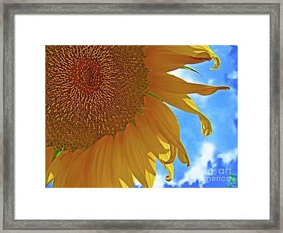 Blue Sky Sunflower Framed Print