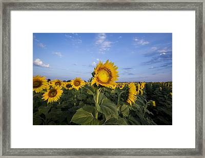 Blue Sky Sunrise Framed Print