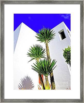 Tall Palms And Blue Sky Framed Print by Wilf Doyle