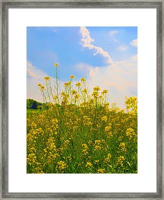 Blue Sky Yellow Flowers Framed Print by Bill Cannon