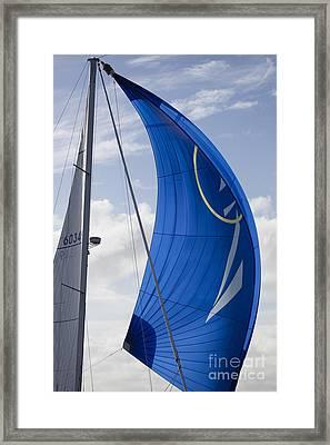 Blue Spinnaker Sy Alexandria Framed Print