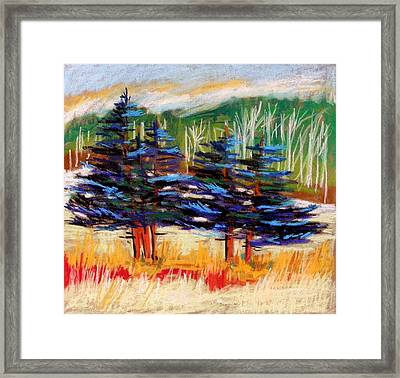 Blue Spruce Stand Framed Print by John Williams