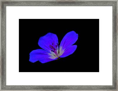 Blue Stamen Framed Print