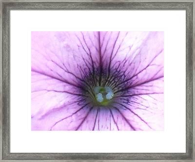 Blue Stamened Petunia Framed Print by Ward Smith