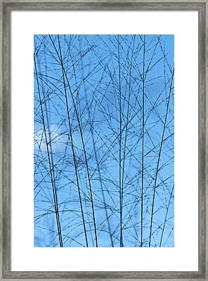 Blue Standing Framed Print