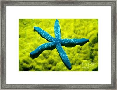 Blue Starfish On Poritirs Framed Print by Mitch Warner - Printscapes