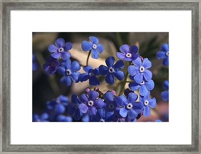 Blue Sterner Framed Print