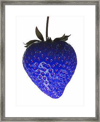 Blue Strawberry Framed Print by Tim Booth