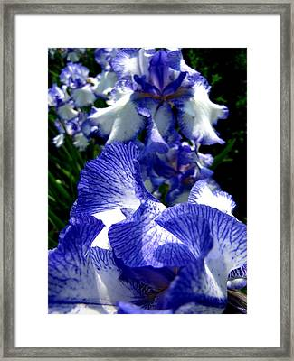 Blue Streak Framed Print by Scott Hovind