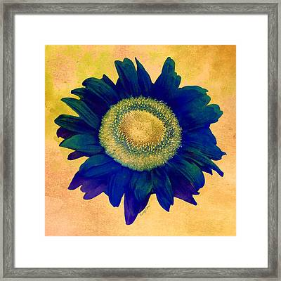 Blue Sunflower Framed Print