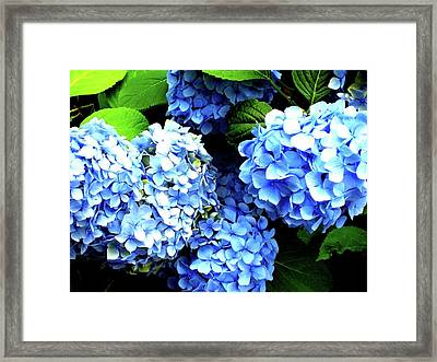 Blue Sunshine Framed Print