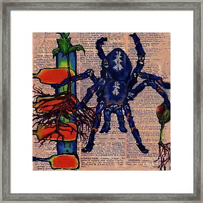 Blue Tarantula Framed Print by Emily McLaughlin